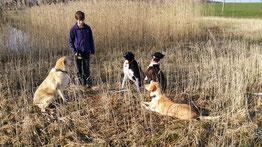 Hundepension Krambambuli Ausflug zum Teich