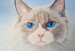 """Katze """"Ashanti"""" von mir in Pastell gemalt"""