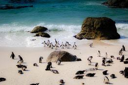 Pinguine Gartenroute Hochzeitsreise