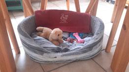 Das Bettchen steht bereit mit Spielsachen
