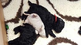 Sylou und Geschwister Woche 3
