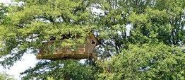 Cabane en l'air R sur un arbre perché
