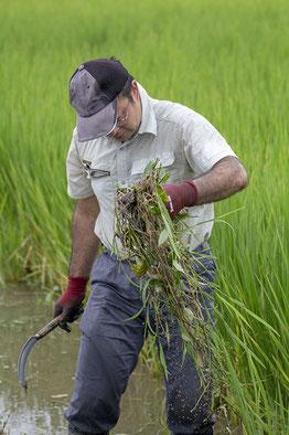夏、雄町の田んぼで草刈り。暑く、なが~い夏だった!