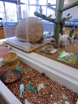 ●観察センターの中は、興味深い展示がいっぱい!