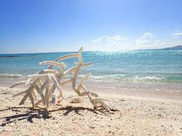 サンドパラダイスの真っ白なサンゴ