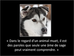 Happy-Go-Lucky Dog - Stage en éducation canine