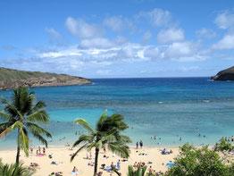ハワイ オアフ島 ワイキキ ハナウマ湾 オプショナルツアー 専用車での貸切観光 チャーター 日本語タクシー