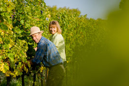 handwork in the organic vineyard
