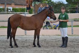 Delicia Dance, Championne de Fr femelle NF 1 an 2014