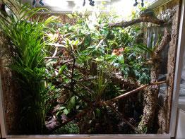 Furcifer pardalis terrarium