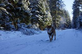 Endlich Shiba Wetter, mit Schnee