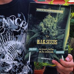 semillasfeminizadas, semillas marihuana, growshop, semillas big seeds, banco semillas big seeds