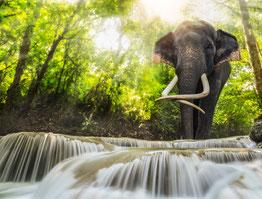 Motivierende Geschichte eines Elefanten