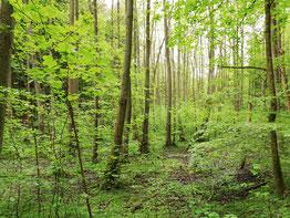 Shirin-yoku: Baden im Wald