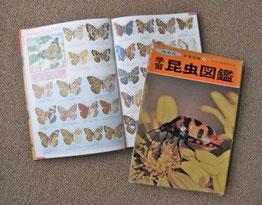 往時の少年、憧れの昆虫図鑑!(保育社1970年)