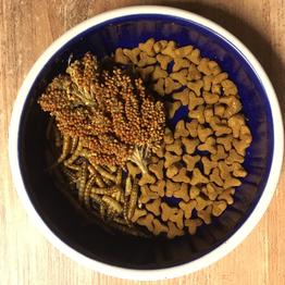 Katzenfutter, Mehlwürmer und rote Hirse