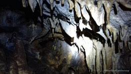 Visite d'une grotte