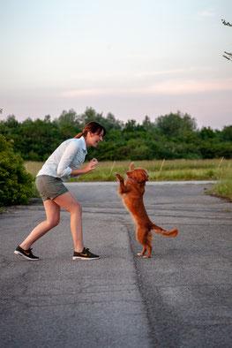 Hundeerziehung Bruckmühl