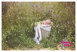 wunderschöne zarte Haarbänder, für Neugeborenen, baby, Kinder, Mädchen, Taufe, Kommunion, Schulanfang, Hochzeit, Geburt, erste Fotoshooting, Fotografie, Neugeborenenfotografie