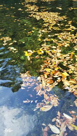 歩く鳥飛ぶ鳥秋の深みへと 佳子