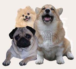 """Собаки питомника """"Альтера Парс"""""""
