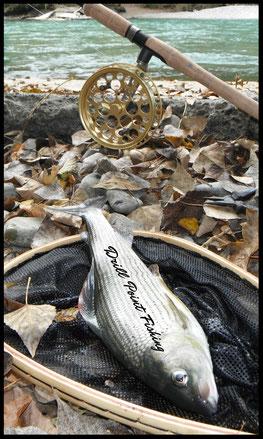Wendelaufrolle Zapfenfischen Flussfischen Laufrollen Felchenfischen