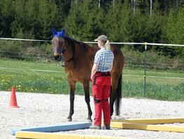 Ein Coaching mit Pferden ist effektiv, effizient und nachhaltig - horse-feedback.ch