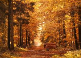 Chemin d'automne en accompagnement de gestion de carrière des particuliers en psychologie du travail, Laurence Martin, Forest