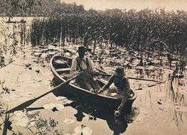 Seerosen sammeln Emmerson 1887