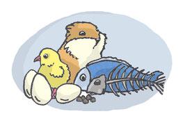 Grafik: NAhrung des Fuchses: Nagetiere, Jungvögel, Aas, Eier, Fisch
