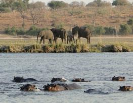 Elefanten und Nilpferde
