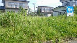 背丈ほどある雑草