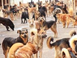 Hilfe für Straßenhunde in Russland