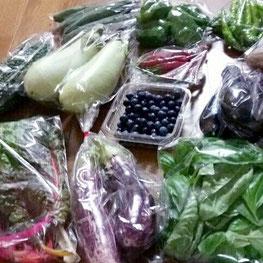 飯塚農園さんの宅配お野菜です