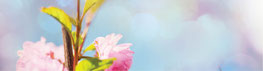 Reiki Angebot Bachblütenberatung Andrea Ehn