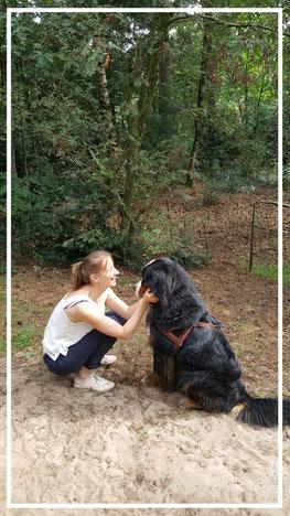 Gedragsconsultatie  hond Berner Sennen  Yhindhi