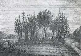 Upstalsboom, Ansicht vom 1796, via Wikimedia Commons