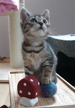 Willkommen in unserem Leben, kleines Katzenmädchen Fibi :-)