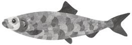 Fisch | Hering | paperfjord | Johann Lewy