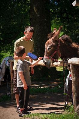 ferme pédagogique : visite pour les enfants en Limousin