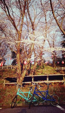 運動公園 桜 タイレル