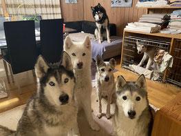 Wir warten auf unser Weihnachts-Chrömli (Yukon sitzt ausserhalb des Bildes)