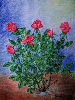 Zeichnung von roten Rosen (Buntstiftzeichnung)