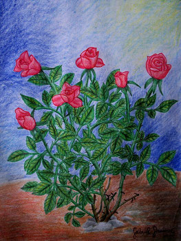 Drawing of red roses (coloured pencil)