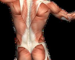 Cyriax Therapie, Physiotherapie Basel, Massage Basel, Rehabilitation Basel, Schulter, Nacken, Rücken, Bandscheibe, Knie, Hilfe bei Schmerzen, Kopfschmerzen, Ellebogen, Fuss