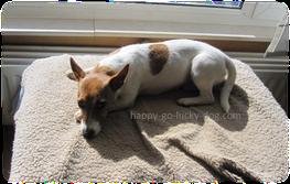 Happy-Go-Lucky Dog - Board & train