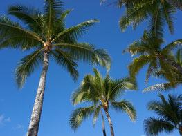 ハワイ オアフ島 ワイキキ パームツリー やしの木 オプショナルツアー 専用車での貸切観光 チャーター