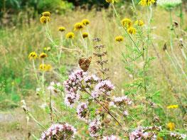 Blumenwiese mit Scheckenfalter, Foto: U. Postler