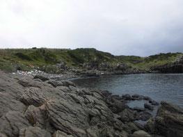 アオリイカ釣り 釣り場の写真