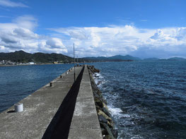 アオリイカ 釣り場の写真
